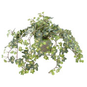 Creative Displays Ivy Plant in Glass Vase