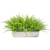Creative Displays Grass in Wooden Handled Basket
