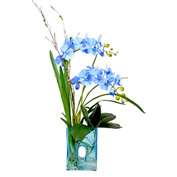Creative Displays Blue Orchid In Contemporary Style Blue Glass Vase