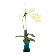 Creative Displays Cream Veranda Orchid In Teal Green Glass Container