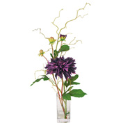 Creative Displays Purple Garden Dahlia In Square Glass Vase