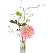 Creative Displays Peach-Pink Garden Dahlia In Square Glass Vase