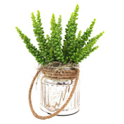 Creative Displays Sedum Cactus In Silver Jar With Rope Handle
