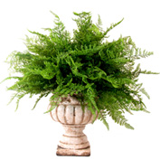 Creative Displays Maiden Hair Fern In Ceramic Pot