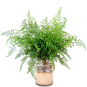 Creative Displays Green Fern In Glass Cylinder With Sand & Rocks
