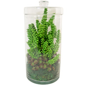 Creative Displays Cactus, Succulents, & Moss In A Clear Glass Canister With Lid