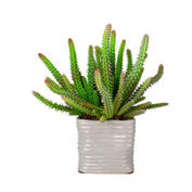 Creative Displays Green Cactus In Square Pot