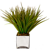 Creative Displays Green Grass In Square Vase