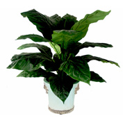 Creative Displays Spathiphyllum Tree In Embellished Aqua Blue Ceramic Planter