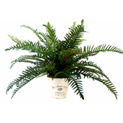 Creative Displays River Fern Plant In Embellished Clay Pot