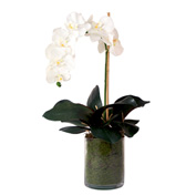 Creative Displays White Orchid In Moss-Filled Glass Cylinder