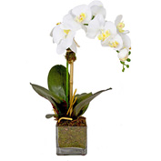 Creative Displays White Orchid In Square Glass