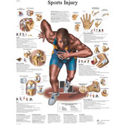 3B® Anatomical Chart - Sports Injuries, Sticky Back