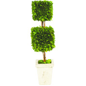 "Sage & Co.® Preserved Boxwood Double Square Topiary, 6""W x 6""D x 24""H"