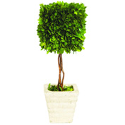 """Sage & Co.® Preserved Boxwood Square Topiary, 6""""W x 6""""D x 16""""H"""