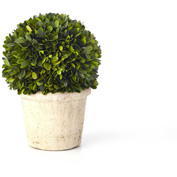 "Sage & Co.® Preserved Boxwood Round Topiary, 8-1/2""W x 8-1/2""D x 11-1/2""H"