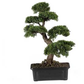 Nearly Natural 24'' Cedar Bonsai Silk Plant