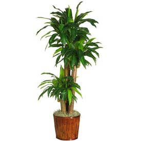 Nearly Natural 62'' Dracaena with Basket Silk Plant
