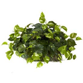Nearly Natural Pothos Ledge Plant (Set on Foam) Silk Plant