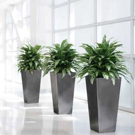 """OfficeScapesDirect 32"""" Double Silver Queen Silk Plant"""