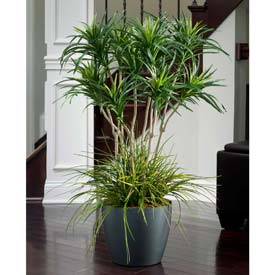 OfficeScapesDirect 3.5' Deluxe Yucca Silk Plant