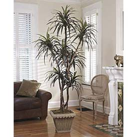 OfficeScapesDirect 6' Dracaena Silk Tree