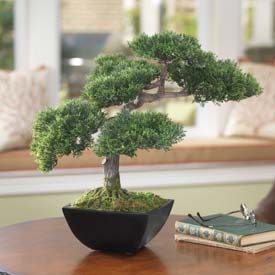 OfficeScapesDirect Cypress Bonsai Faux Tree